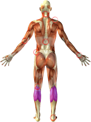 Back Pain Physical Therapy Rochester